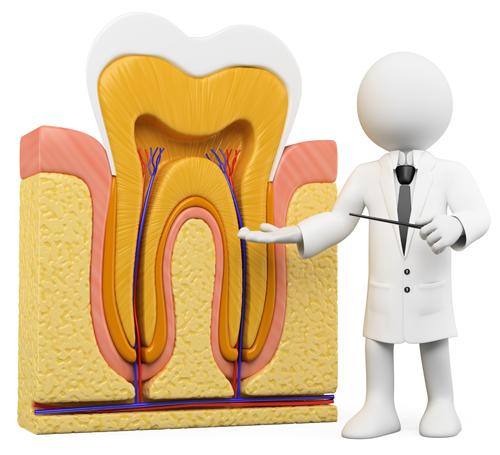 歯の神経の治療「根管治療」とは